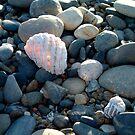 Inner Glow - Boulders Beach by Karen Eaton