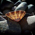 Sunlit Shell - Boulders Beach by Karen Eaton