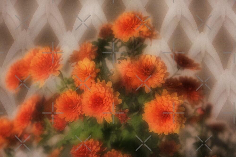 Chrysanthemums  by CarolM