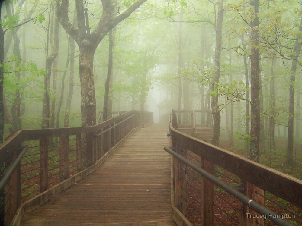 Chehaw State park  Anniston Alabama by Tracey Hampton