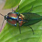 Beetle beauty 1 by jaycraft