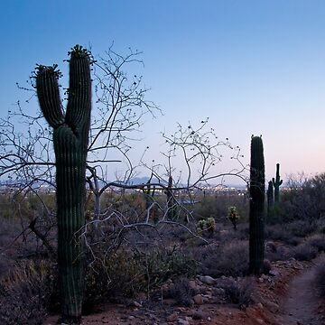 Walking with Saguaro by valentina9