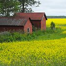 Red Sheds, Yellow Fields by Tracy Wazny
