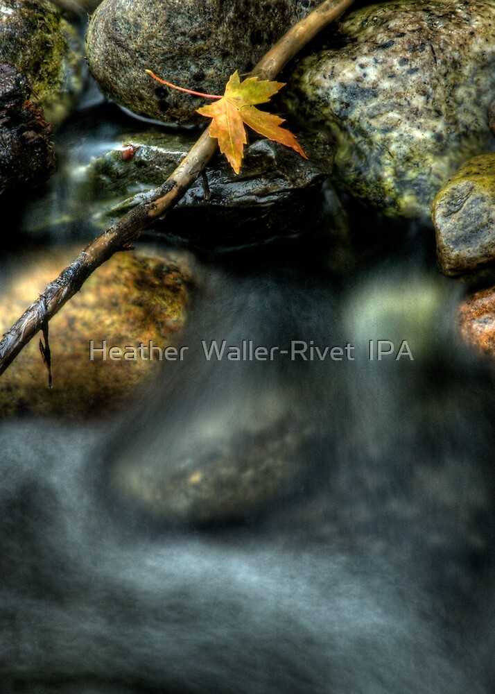 Septembers Meander by Heather  Waller-Rivet  IPA