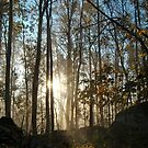 Early Morning in the Autumn Woods by MotherNature2