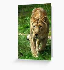 Kalinga the Asiatic Lioness Greeting Card