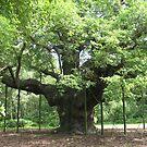 Major Oak, Sherwood Forest by leelee