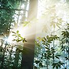 Amazing Light by Patrice Mestari