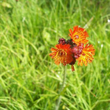 Orange and Pink Flowers by ladymalchav