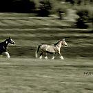 gallop by PJS15204