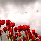Tulips by Tamela J Wolff