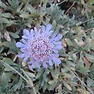 Light Blue Flower by ladymalchav