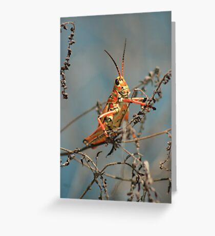 Lubber Grasshopper Greeting Card