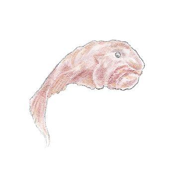 Blobfish by whimsyteaspoon