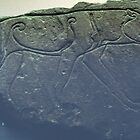 Ardross Pictish Stone C7  at Inverness Museum Scotland 19840915 0005 by Fred Mitchell