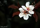 Blossom Beauties of the Night by Briana McNair