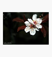 Blossom Beauties of the Night Photographic Print