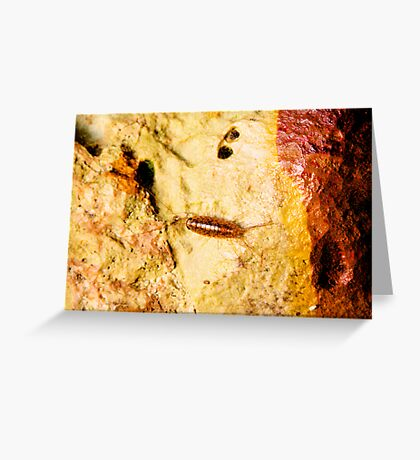 Cave Critter Greeting Card