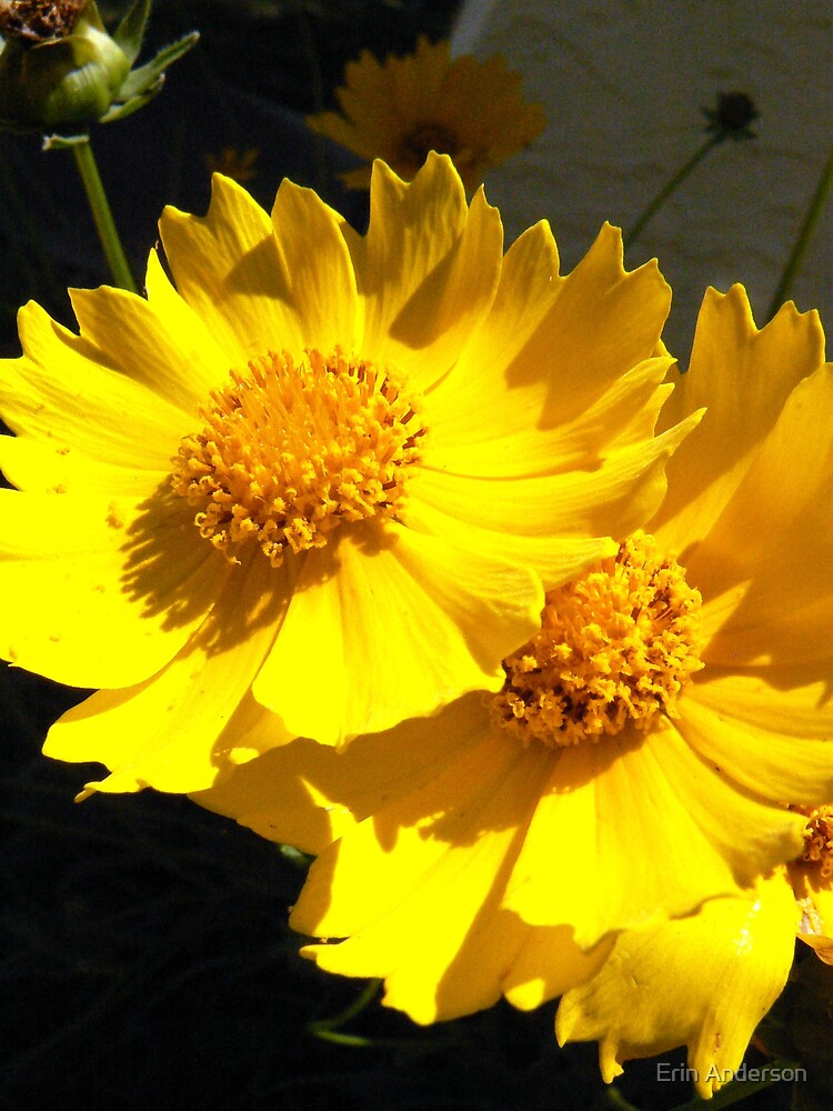 yellow flowers by Erin Anderson
