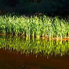 Creek Side Reflections by BGSPhoto
