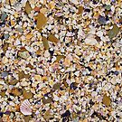 Shells and Pebbles of all kinds by PeteOfTas