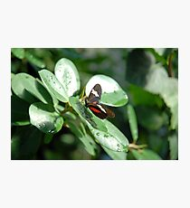 Butterfly Greenery Photographic Print