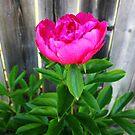 First Bloom by Stephanie Rachel Seely