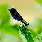 """ Damsel In Blue ""  by Richard Couchman"