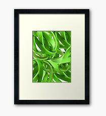 Entanglement in Lime Framed Print