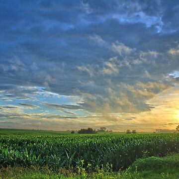 Corn Oceans by LynyrdSky