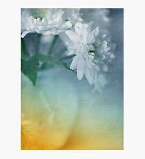Whispery White Vintage in Vase Photographic Print