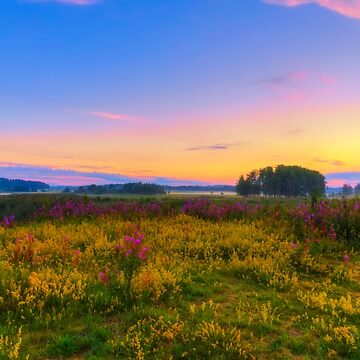 Wildflower Meadow by wekegene