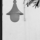 Lamp and leaves. by Paul Pasco