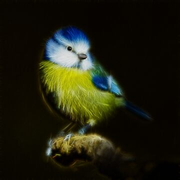 Blue tit by LuciaS