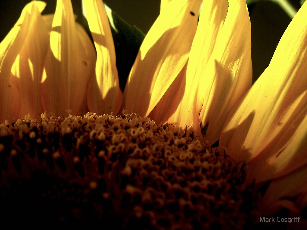 Inflorescence by Mark Cosgriff