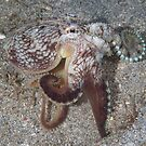 Coconut Octopus Dancing by Mark Rosenstein