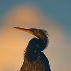 Male Anhinga in the Morning Sun by TJ Baccari Photography