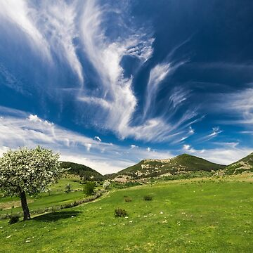 spring landscape with green grass and tree and blue sky by ARGO