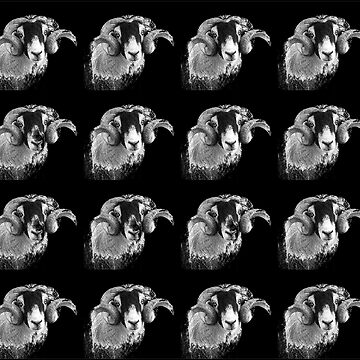 Tiled Black and which moorland sheep by HaleyRedshaw