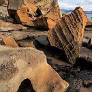Bruny Island Rock Life 2 by Anthony Davey