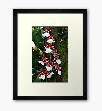 Orchid Framed Print