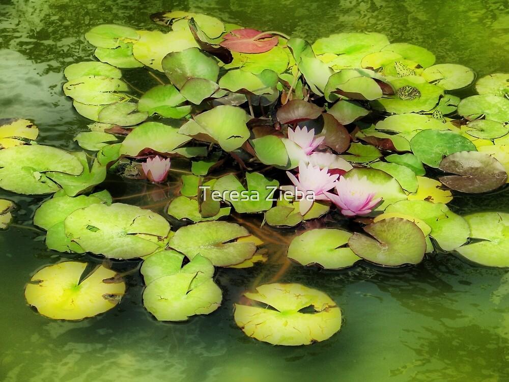 Waterlilies by Teresa Zieba