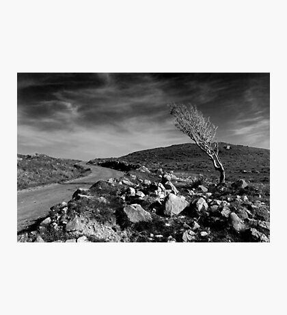 Islay: The Survivor Photographic Print