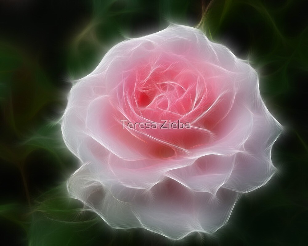 Whisper Rose by Teresa Zieba