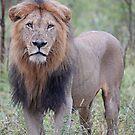 A Lion King! by Anthony Goldman