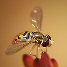 The Fly von ChereeCheree