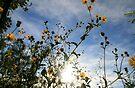 Pickin' Wildflowers by Briana McNair