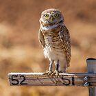 Owl by gemlenz