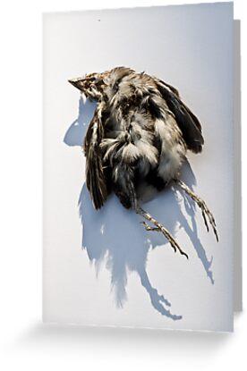 Poor Little Dead Bird by Ilva Beretta