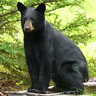 Sitting Black Bear...Mind If I Rest Awhile? by MaeBelle